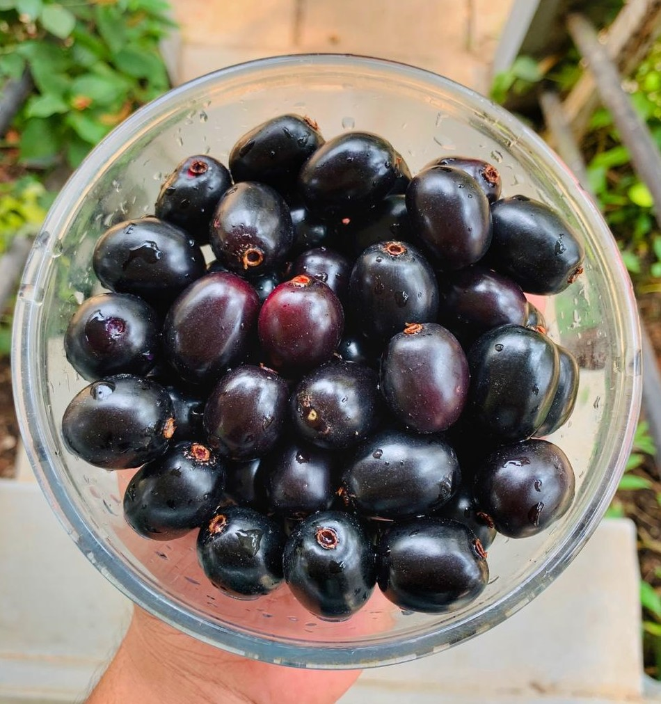 Jamuns In Bowl
